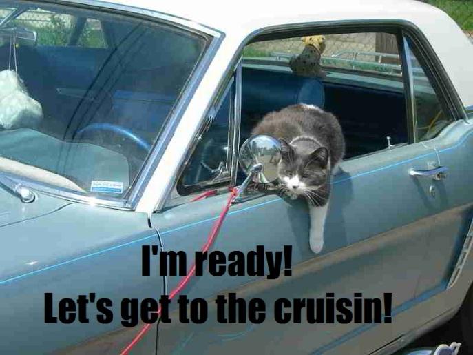 CruisinKittyReady